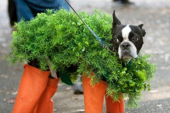 dog costumes 1