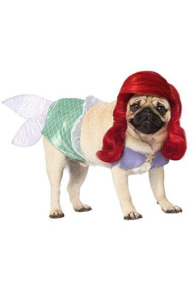 dog costumes 2