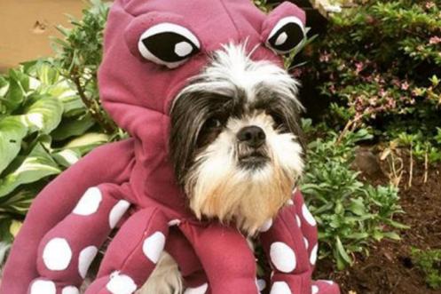 dog costumes 5