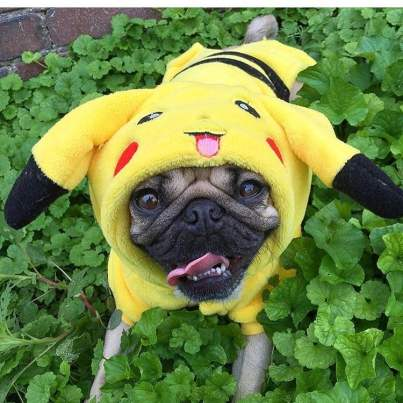 dog costumes 7